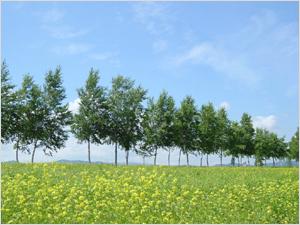 クリーン農業イメージ